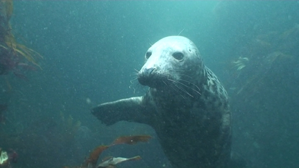 Septembers Farne Island Dive Trip